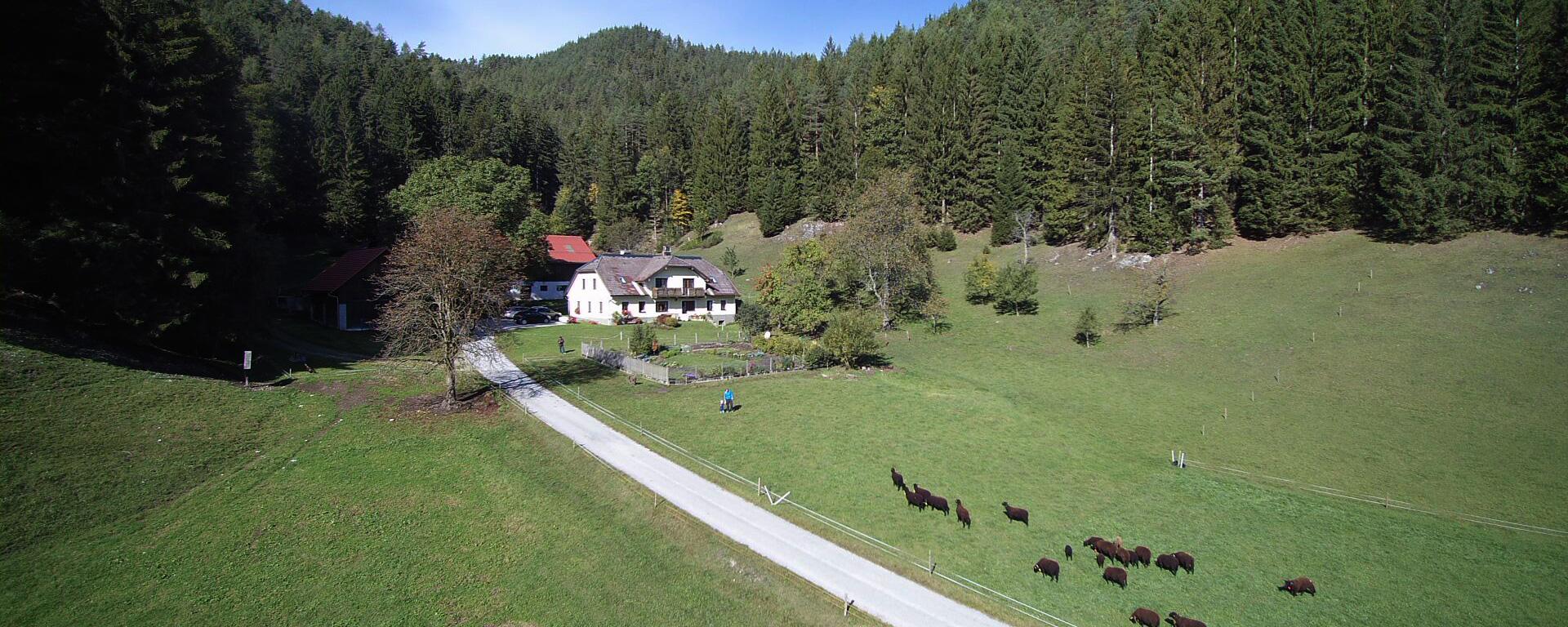 Biohof Scheikl im Herbst